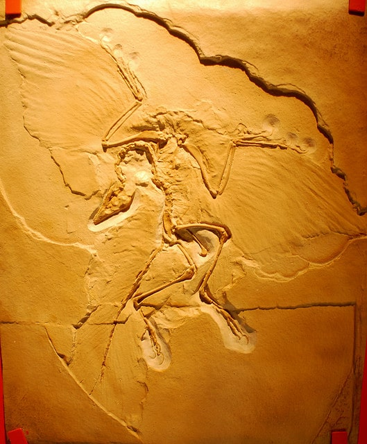 Archaeopteryx remains