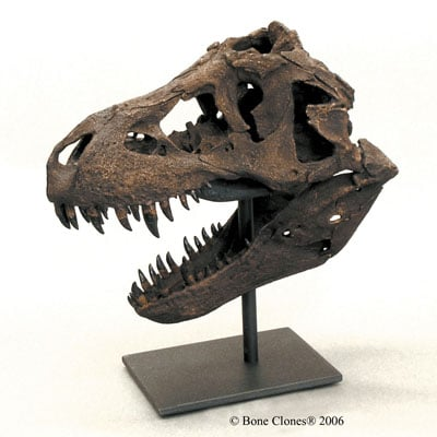 T-Rex Skull Replica from The Evolution Store