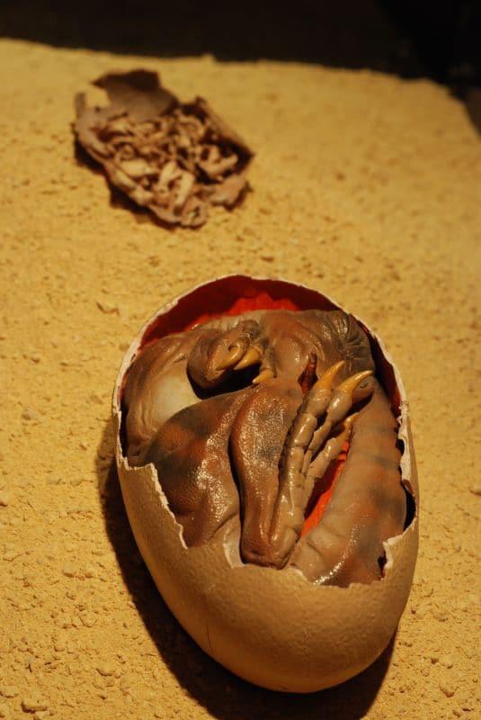 oviraptor egg