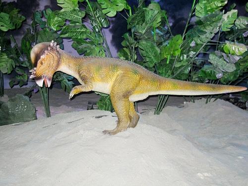 Pachycephalosaur Head Butting