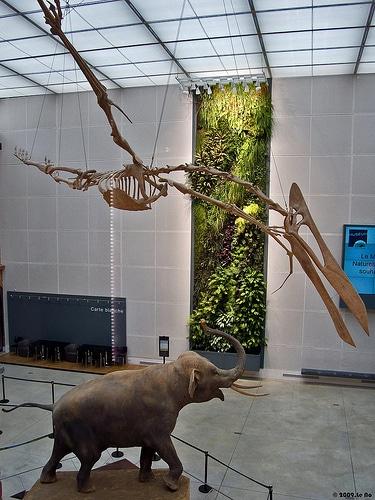 quetzalcoatlus skeleto...