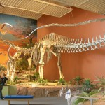 Just How Big Was Seismosaurus?