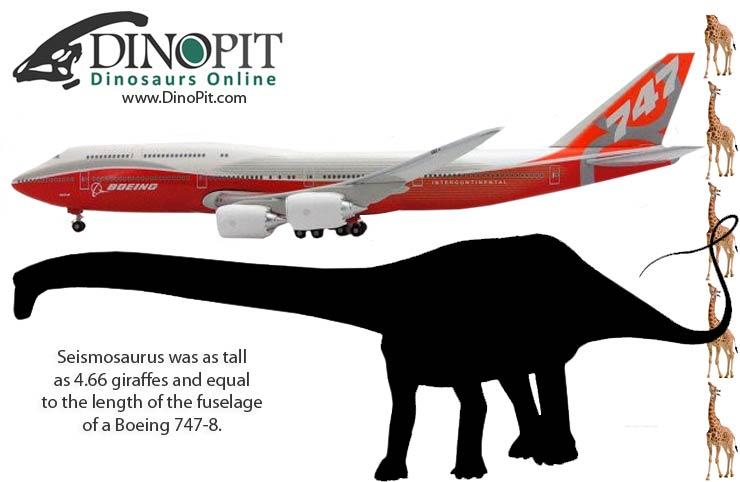 Seismosaurus size