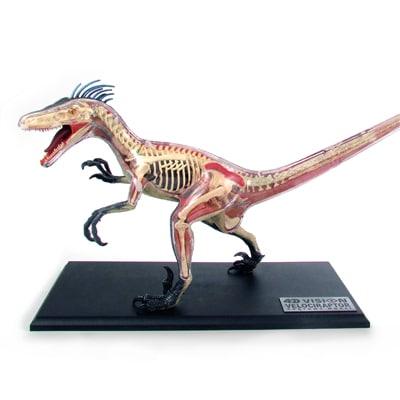 The Evolution Store Anatomical Velociraptor
