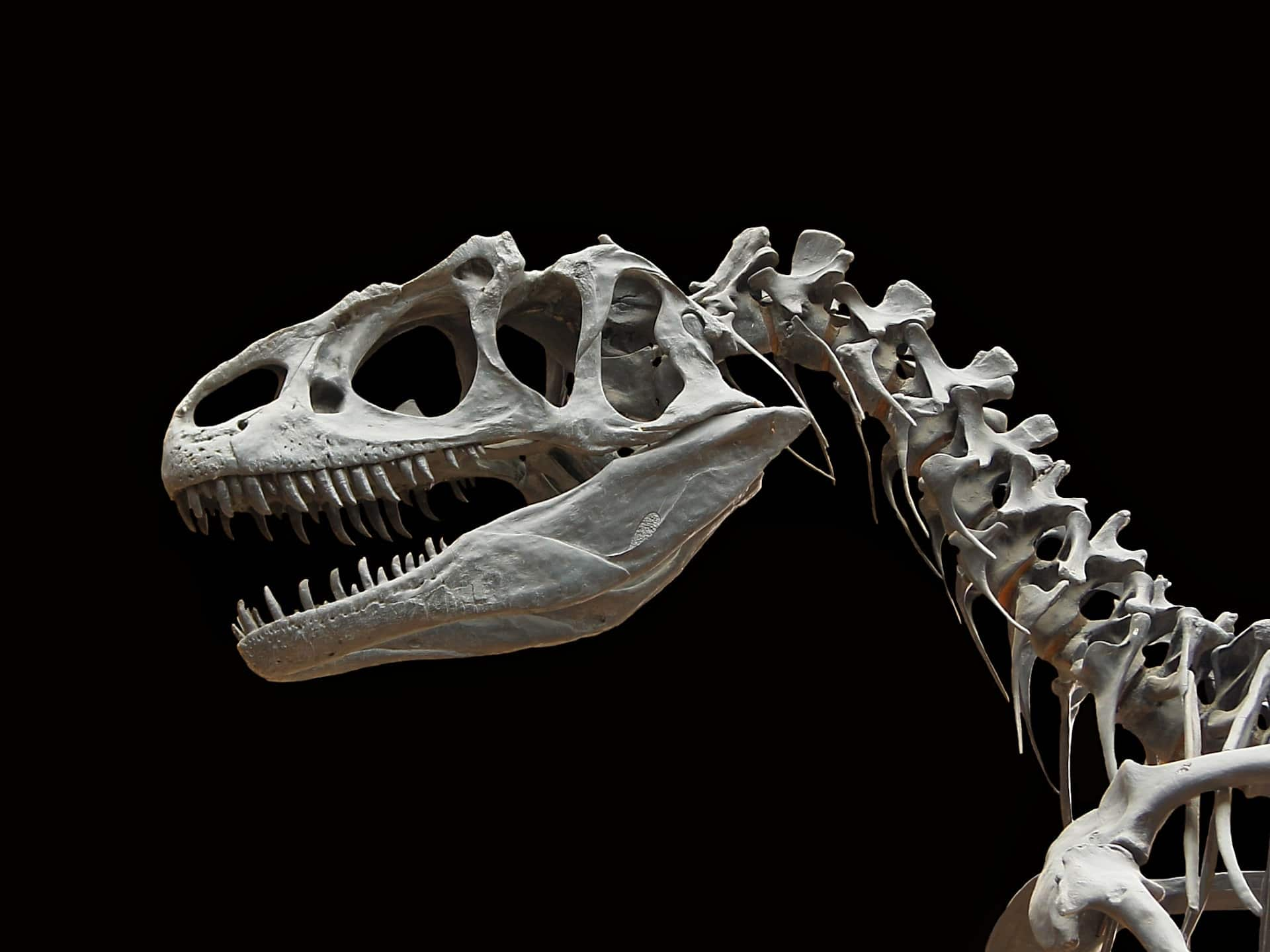 Allosaurus desktop wallpaper