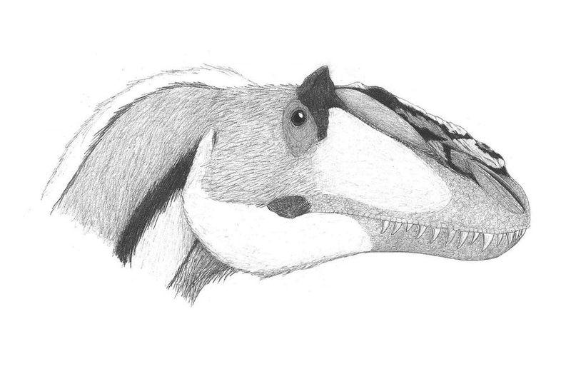 Amazing Dinosaur Discoveries: Yutyrannus