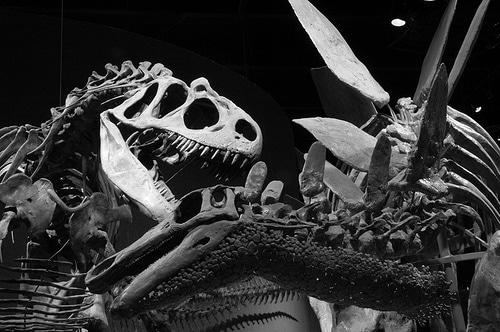 Allosaurus feeding