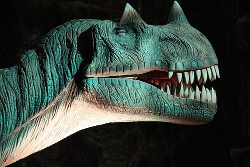 Ceratosaurus horn