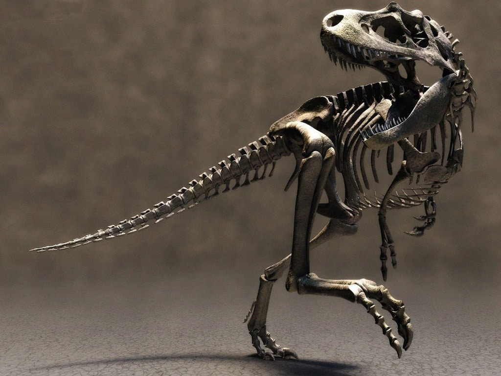 Dinosaur skeleton wallpaper