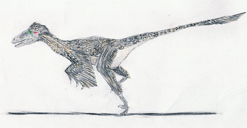 Dromaeosaurus with feathers