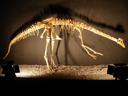 Gallimimus Skeleton