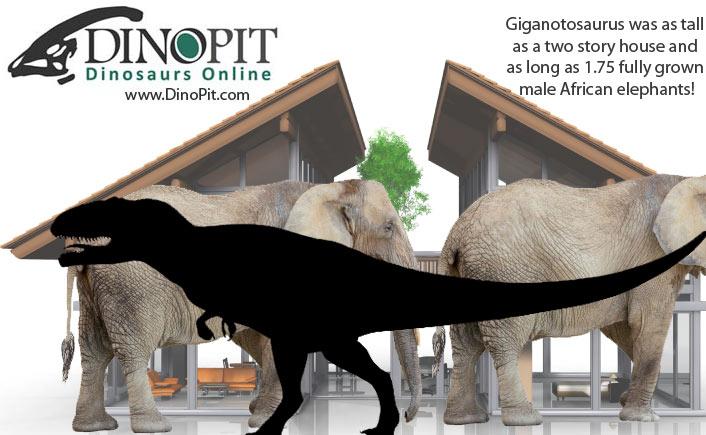 Giganotosaurus size