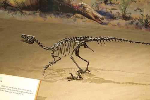 Ornitholestes pose