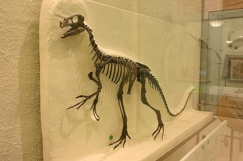 Ornitholestes skeleton