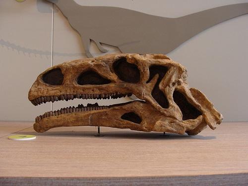 Plateosaurus Skull
