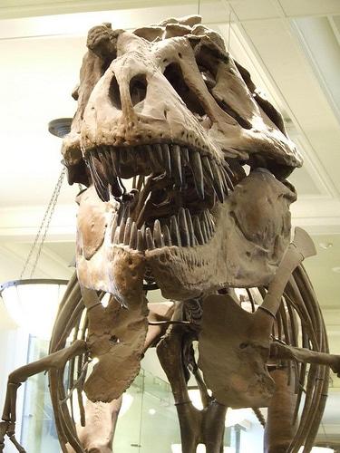 Was Tyrannosaurus Rex a Hunter or Scavenger