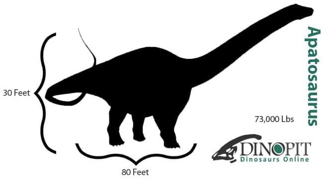 Apatosaurus Size