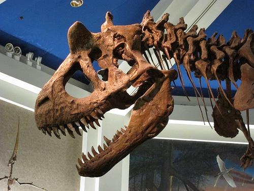 Carnotaurus skull