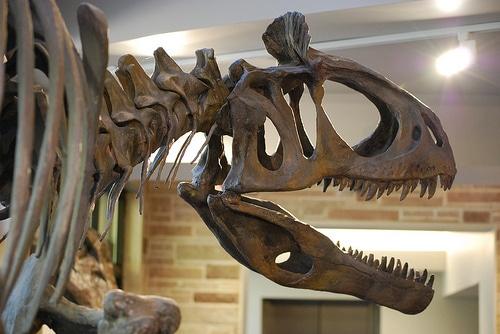 Cryosaurolophus