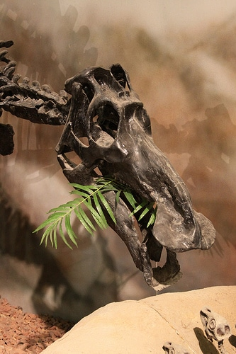 Maiasaura feeding