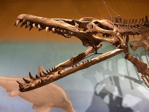 Dinosaur Arthritis: Pliosaurus