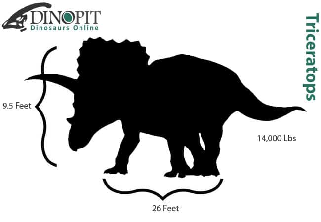 Triceratops Size