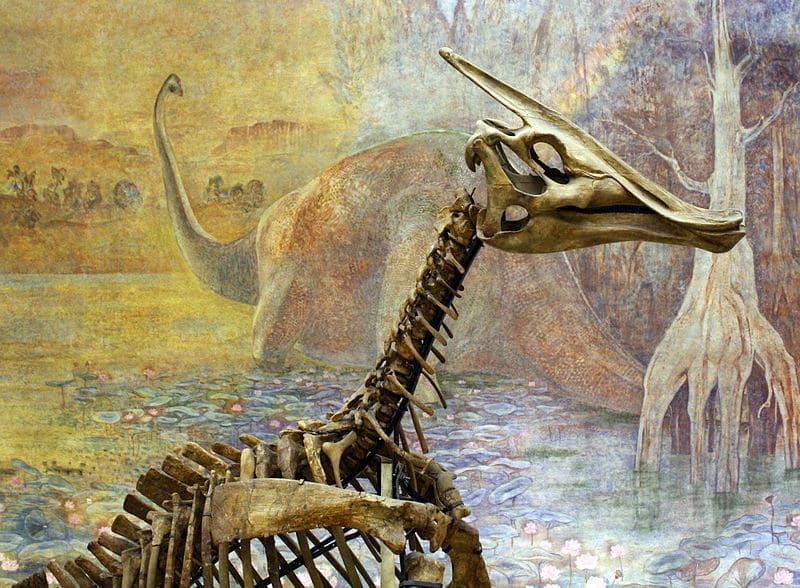 Saurolophus skeleton