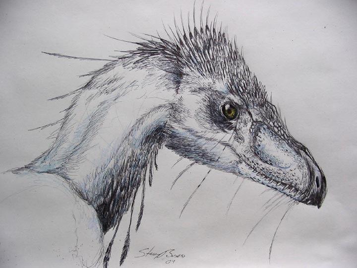Velociraptor Art by DeviantArt Artist Andalgalornis