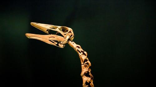 Ornithomimus skull