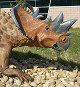 Pachyrhinosaurus