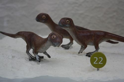 psittacosaurus babies