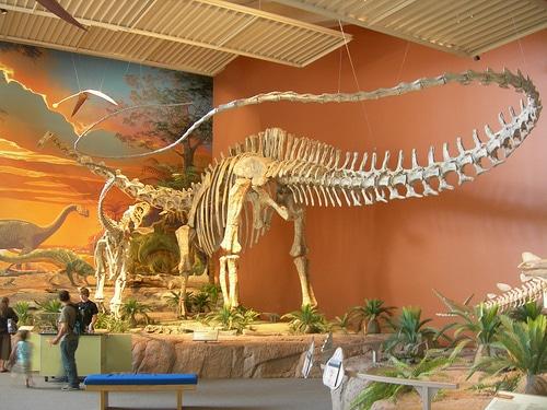 Seismosaurus skeleton