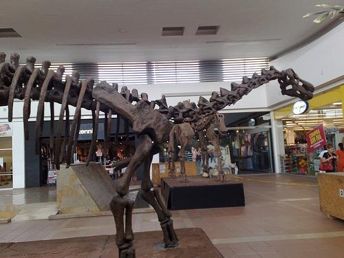 Titanosaurus skeleton