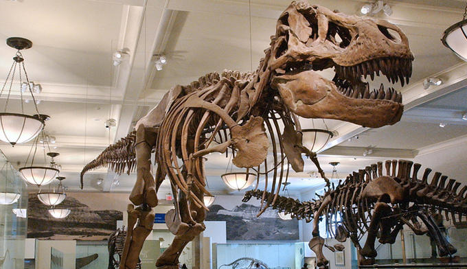Tyrannosaurus rex exhibit