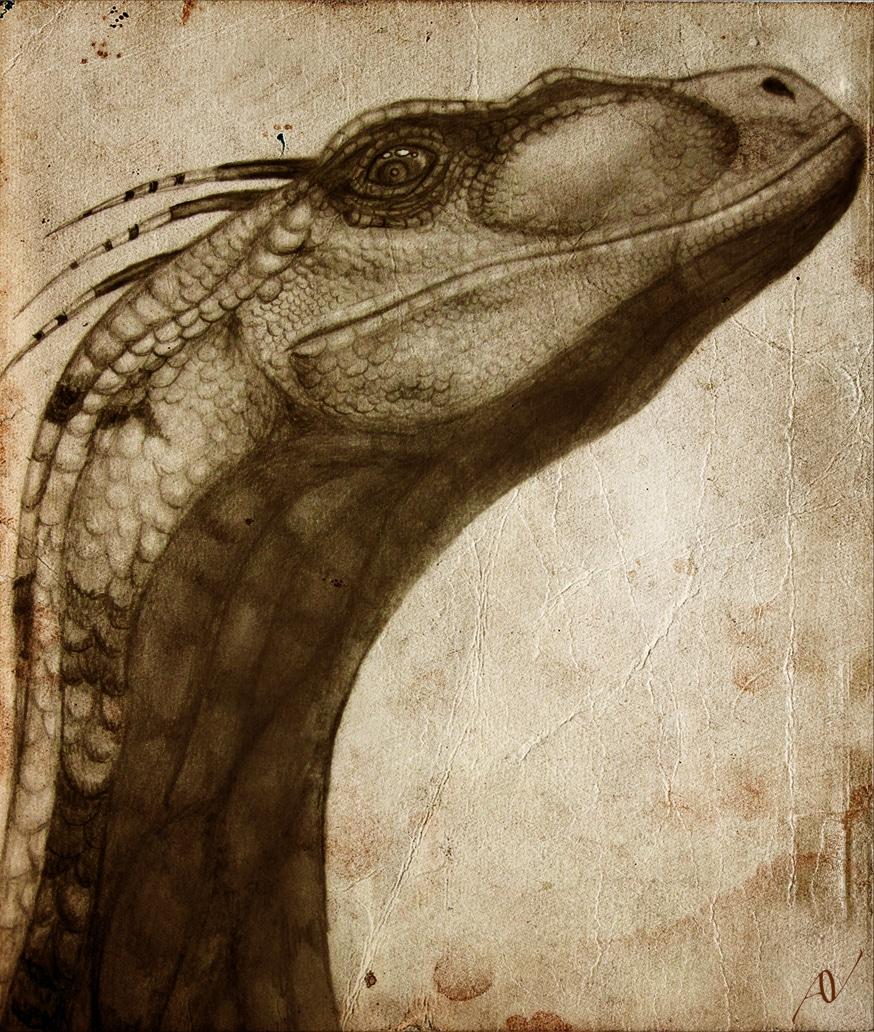 Velociraptor by AerynV