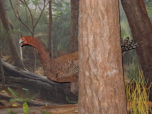 Caudipteryx Hunting