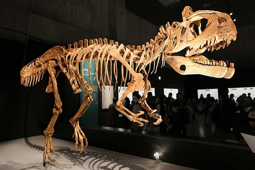 Cryolophosaurus skeleton
