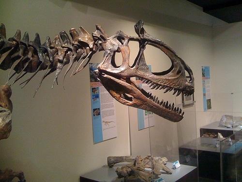 Cryolophosaurus skull