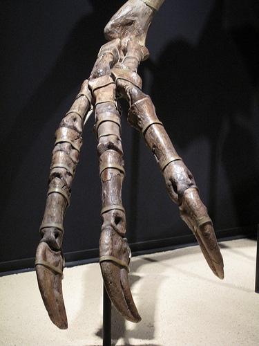 Deinocheirus claws