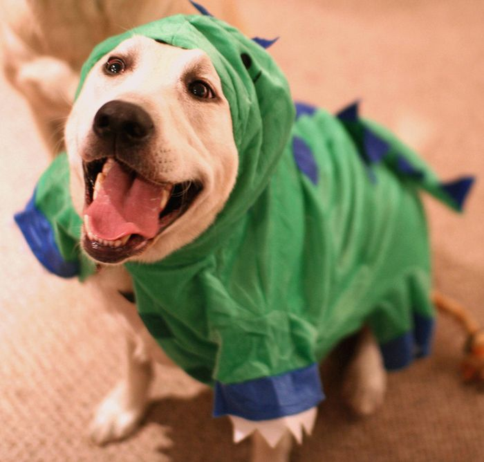 Happy dinosaur dog