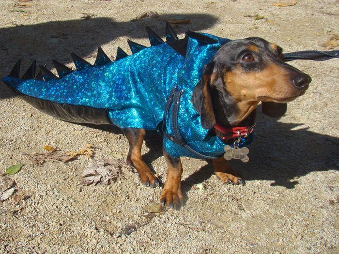 Dinosaur Dachshund