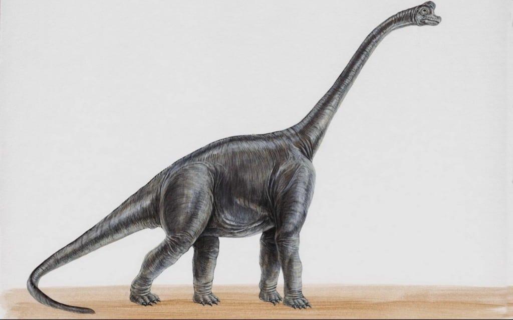 Sauropod wallpaper