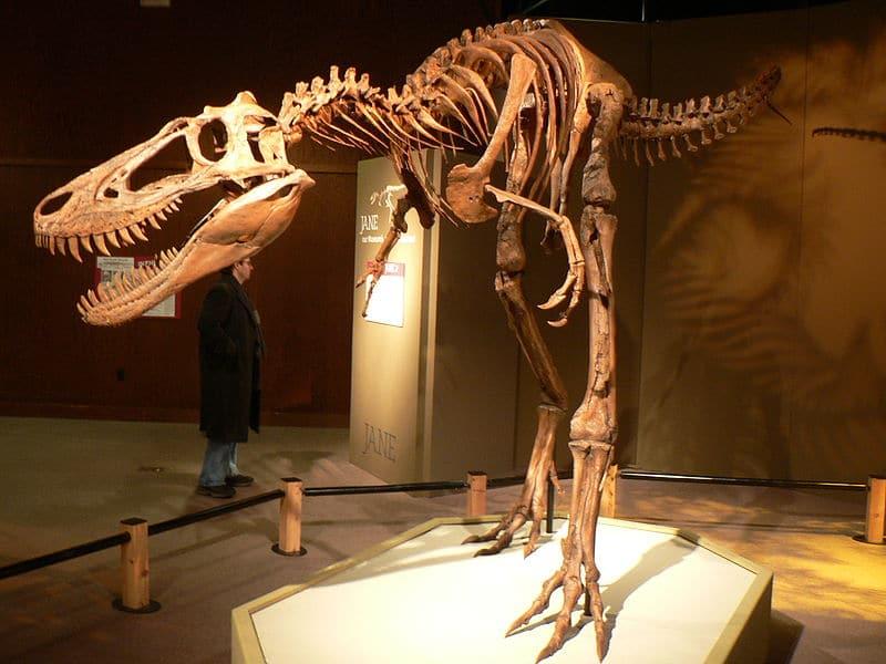 Jane Tyrannosaurus Rex