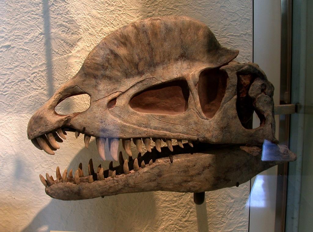Dilophosaurus - DinoPit