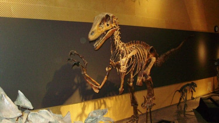 Utahraptor - Photo by Andrew Everett