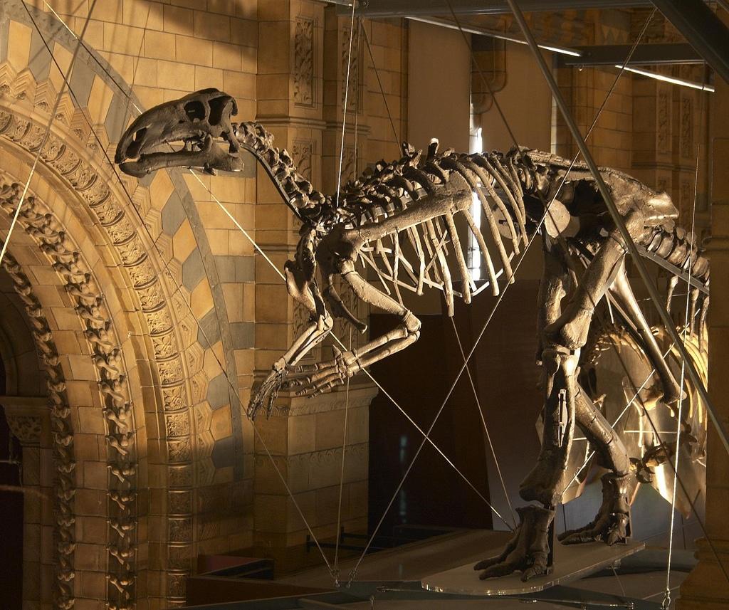 Iguanodon Skeleton - DinoPit