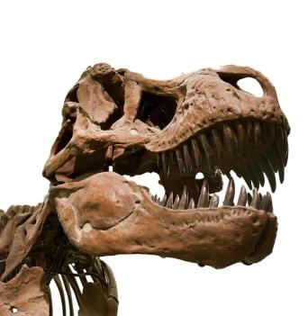 tyrannosaurus rex bite