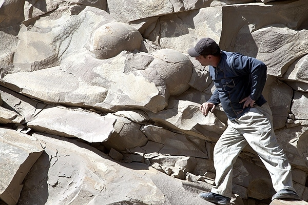 Largest Dinosaur Eggs in the World