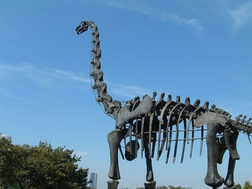 Mounted Dinosaur