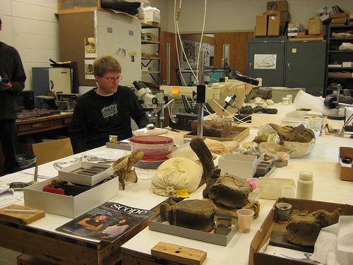 Online Paleontology Programs